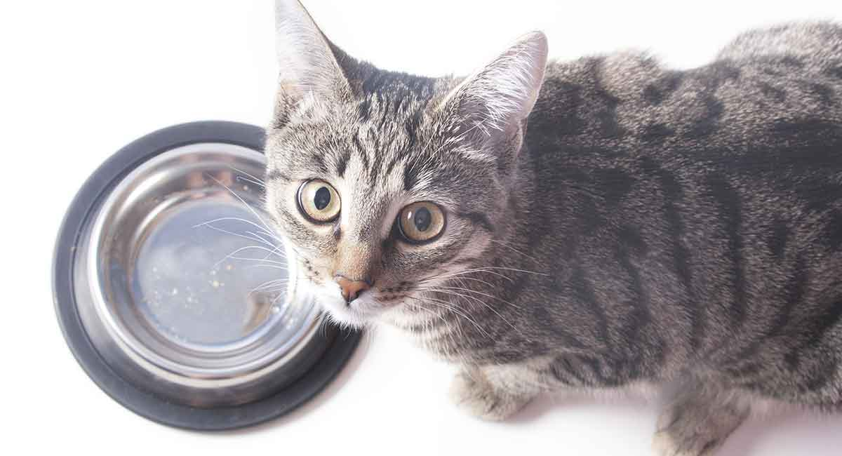 Overfeeding And Also Excessive Weight In Pet Cats